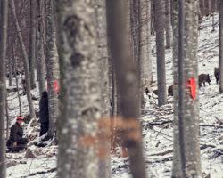 Trop divjih prašičev v LPN na Kočevskem
