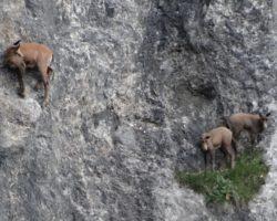 16_Plezalci v skalnem pobočju LPN Kozorog Kamnik