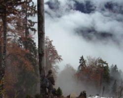20_Planina Košuta v LPN kozorog Kamnik