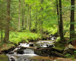 3_26_LPN Pohorje je bogato v vodnimi viri, kar skupaj z ohranjeno naravo dobro vpliva na razvoj populacije gamsa, jelena, kozoroga