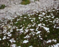 6_Cvetoči gorski travnik v LPN kozorog Kamnik