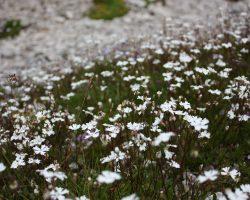 9_ Cvetoči gorski travnik v LPN kozorog Kamnik