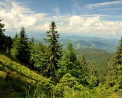 9_Iglasti gozd v pogorju LPN Pohorje