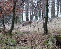 27_V LPN Ljubljanski vrh je prisoten tudi medved
