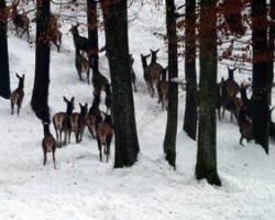 Trop srnjadi v LPN Ljubljanski vrh