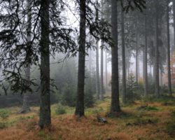 Neokrnjena narava je življenjsko okolje divjadi v LPN Pohorje